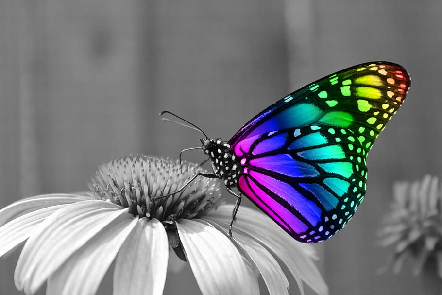 butterfly-butterflies-insects-insect